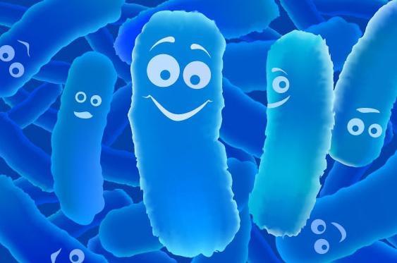 бактерии наших йогуртов проникают прямо в кишечник дайго