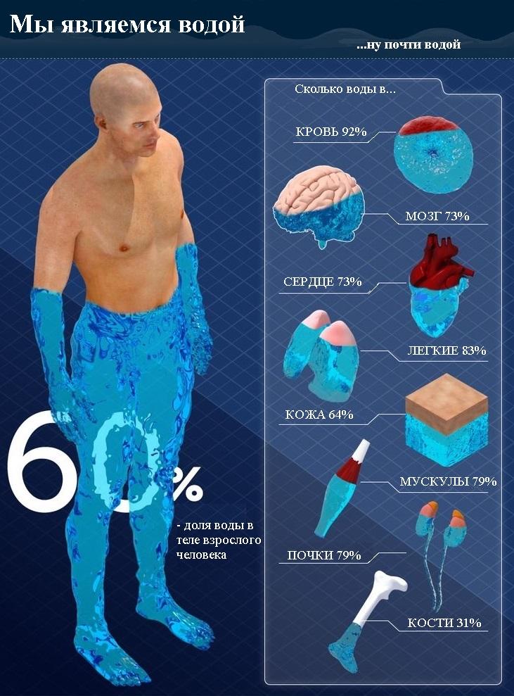 содержание воды в организме